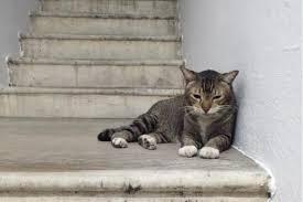 the stray tom cat